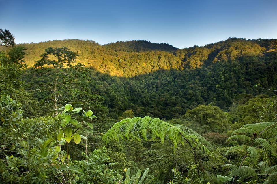 Osa Halbinsel Costa Rica