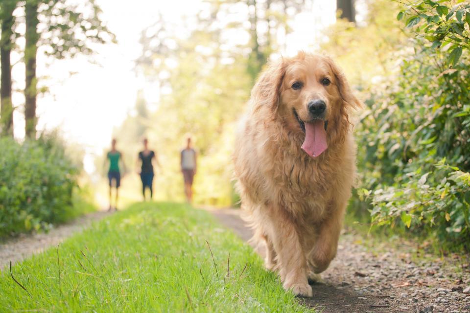 Wandern ohne Gepäck mit Hunden