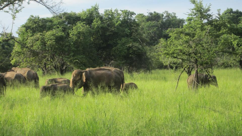 Wandern in Sri Lanka - Yala - Nationalpark