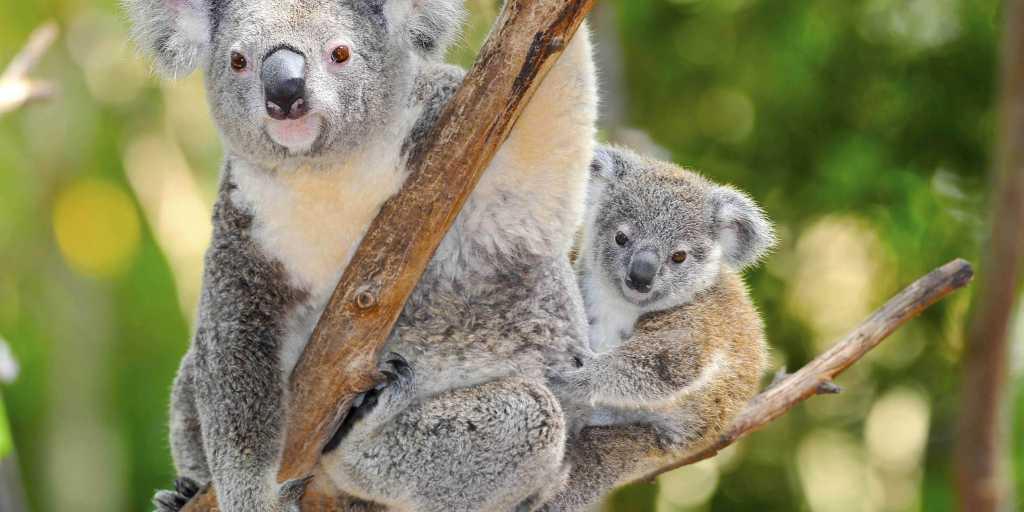 Wandern in Süd-Australien - Kangaroo-Island wandernd entdecken