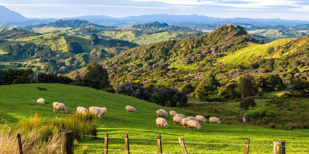 Wandern auf der Nordinsel Neuseelands - über grüne Hügel zu Vulkanen wandern