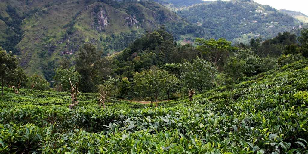 Wandern auf Sri Lanka