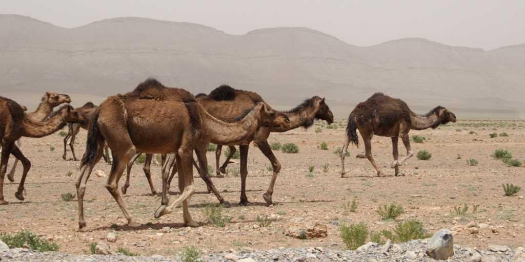 Wandern in Tunesien - Kultur & Landschaft entdecken