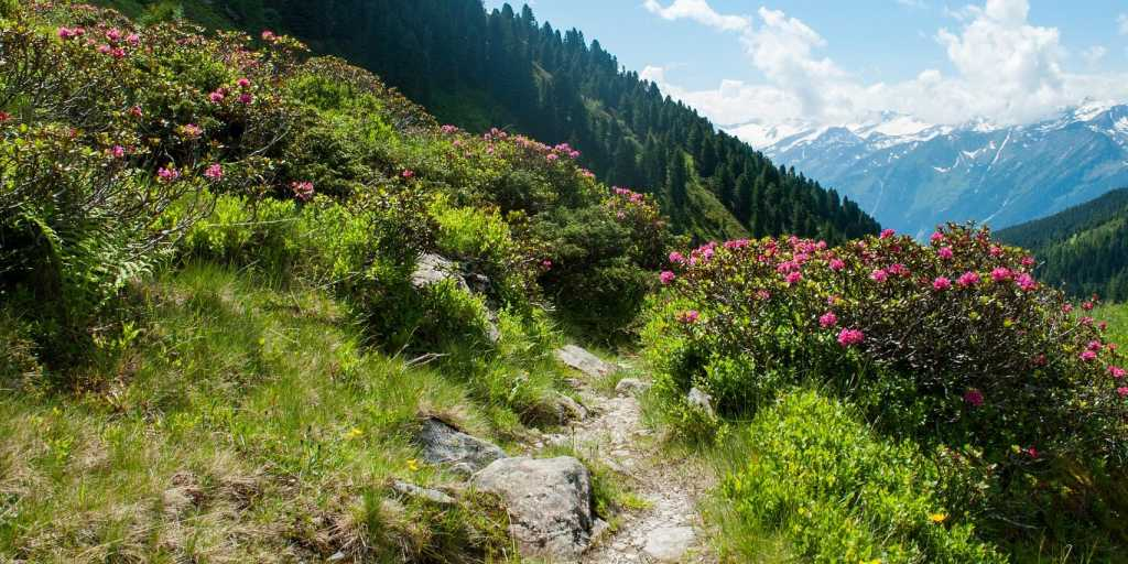 Wandern in den Alpen - grenzüberschreitendes Wandern