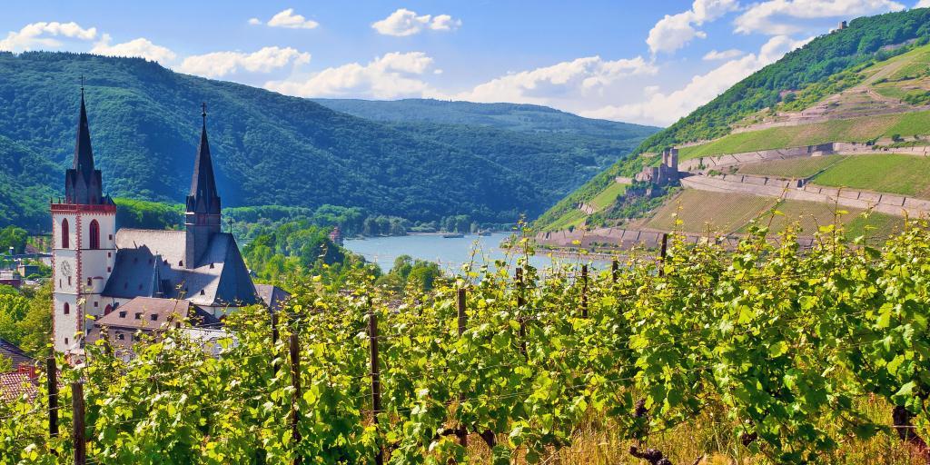Wandern im Rheingau - Wanderurlaub individuell oder geführt