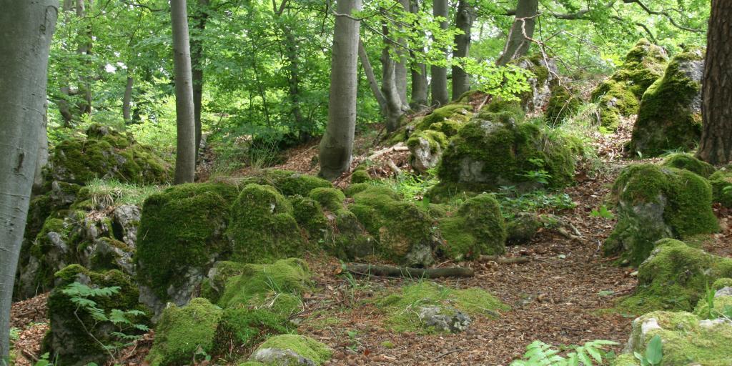 Wandern auf dem Keltenerlebnisweg