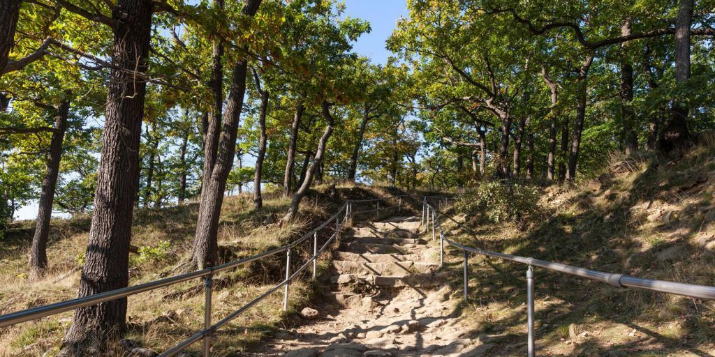 Wandern auf dem Harzer-Hexen-Stieg- 7 Tage - 5 Etappen