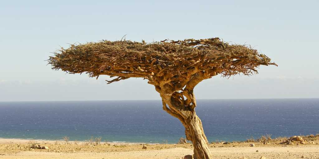 Oman: Geführte Wanderreise zu den Höhepunkte des Landes