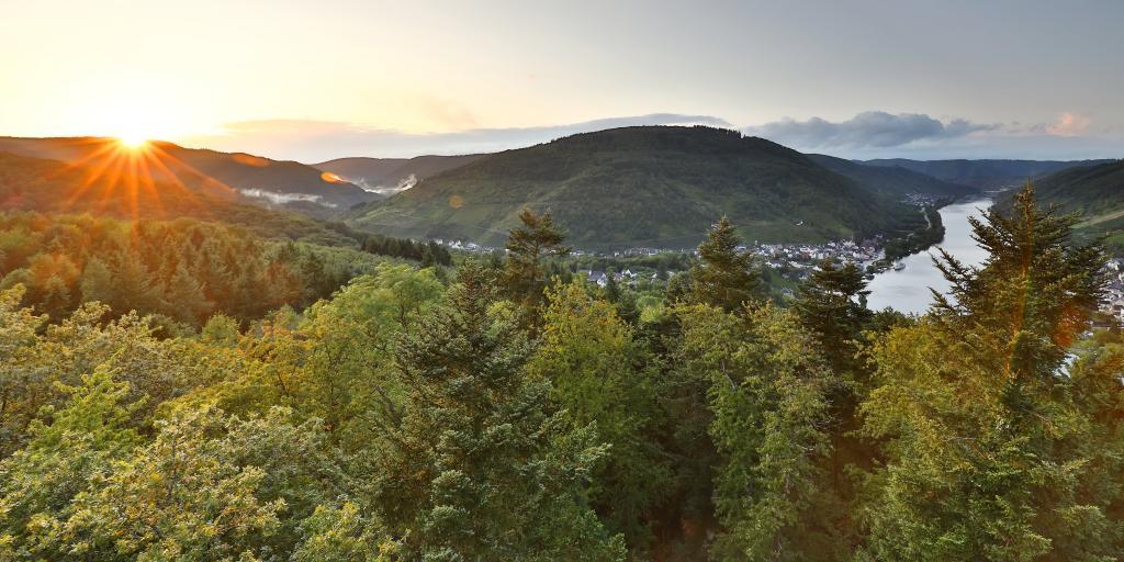 Wandern auf dem Moselsteig: Traumblicke, Römerpfade & Moselweine