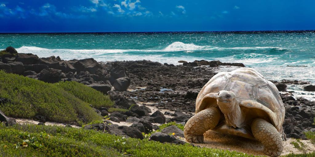 Wandern auf Galápagos: Geführte Wanderung - Verzauberte Inseln