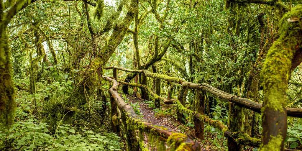 Wandern auf La Gomera: Bergdörfer und Zauberwald