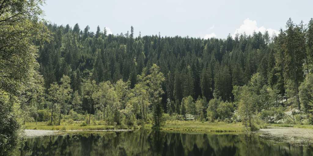 Schwarzwald: Individuell wandern auf dem Westweg von der Alexanderschanze zum Titisee ohne Gepäck