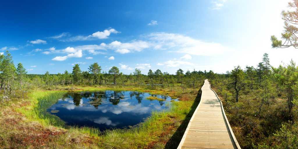 Die große Baltikum-Rundreise: zwischen Handelsstädten und Kurischer Nehrung