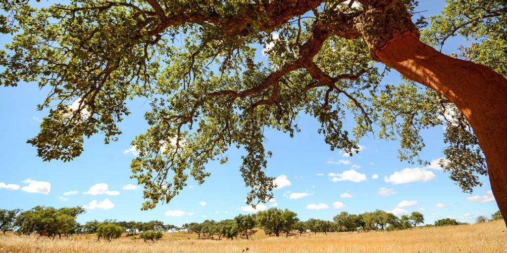 Wandern in Portugal - Rota Vicentina