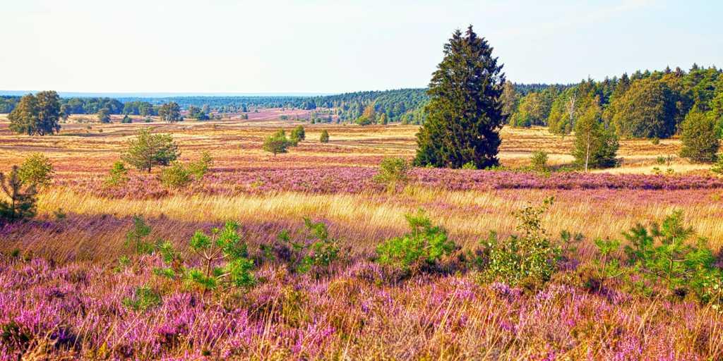Wandern auf dem Heidschnuckenweg in der Lüneburger Heide