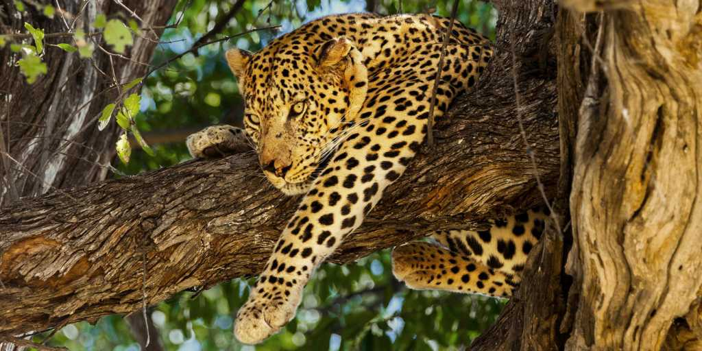 KAZA: Naturerlebnis ohne Grenzen! Namibia - Botswana