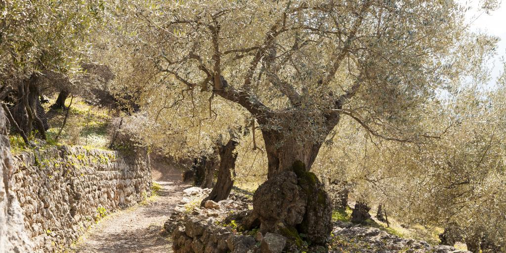 Wandern auf Mallorca - Finca