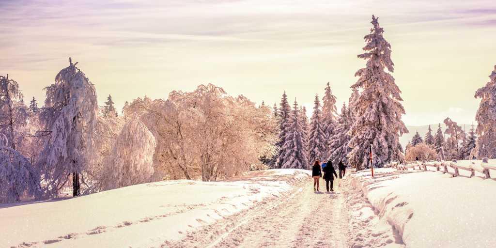 Schwarzwald: Geführte Gruppenwanderung - Schwarzer Wald in Weiß