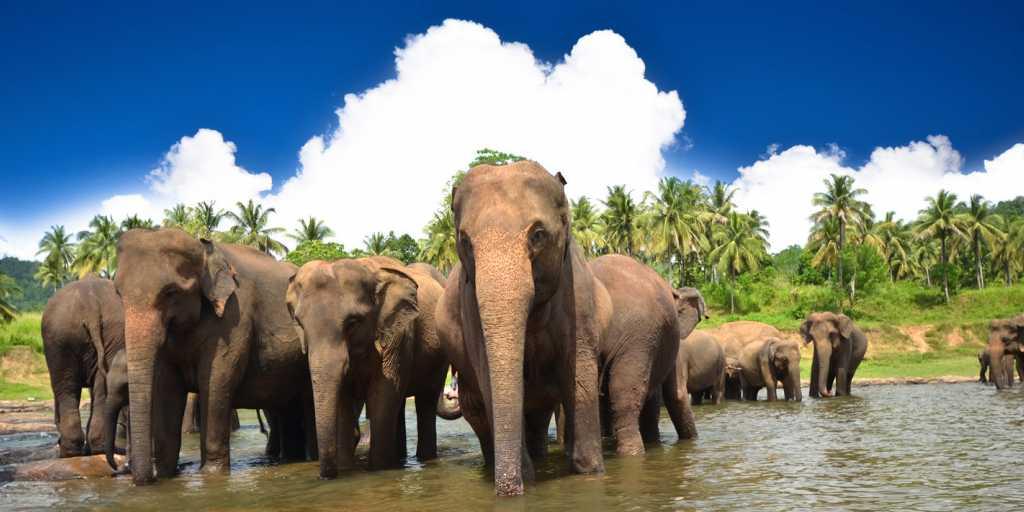 Sri Lanka: Privatreise - Aktivreise - zu Fuß, per Rad und Kanu, 6 Tage