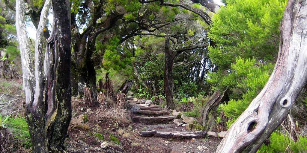 Bienvenidos auf der Sonnenseite - wandern auf La Gomera