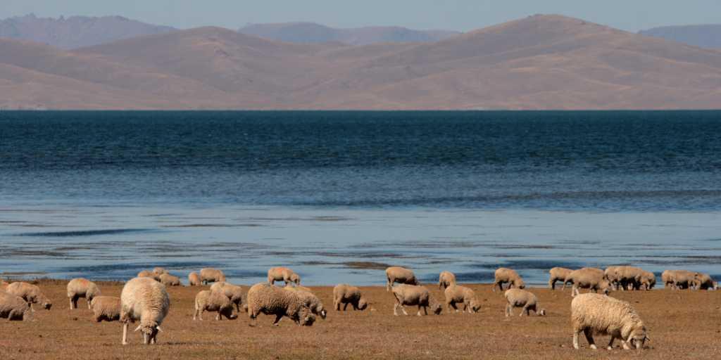 Kirgistan: Geführte Wanderreise zwischen Issyk Kul und Tienschan