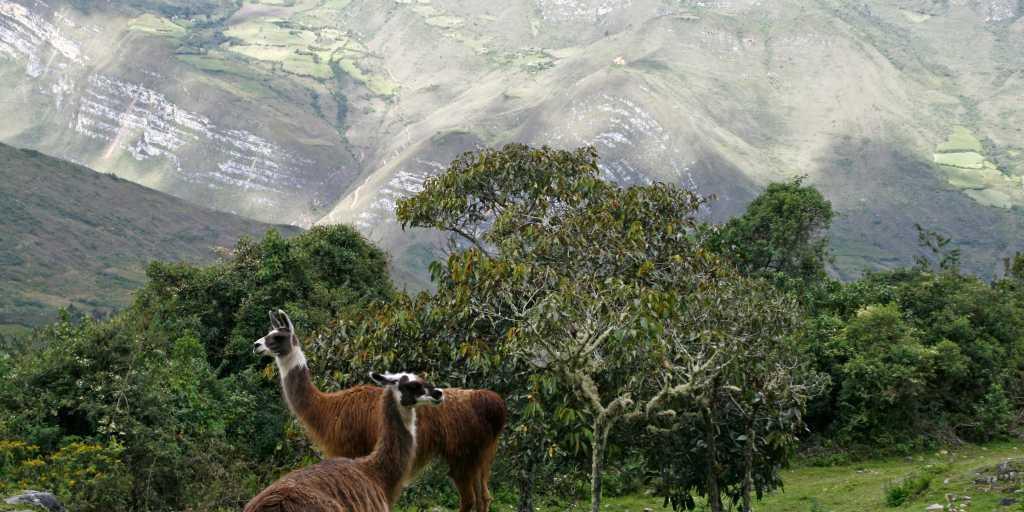 Peru: Geführte Trekkingtour zum Cordillera Huayhuash & nach Huaraz