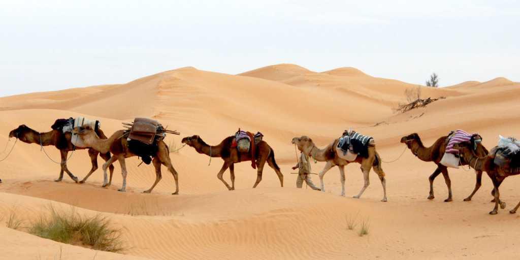 Tunesien: Geführte Wanderreise mit Kameltrekking durch die Sahara