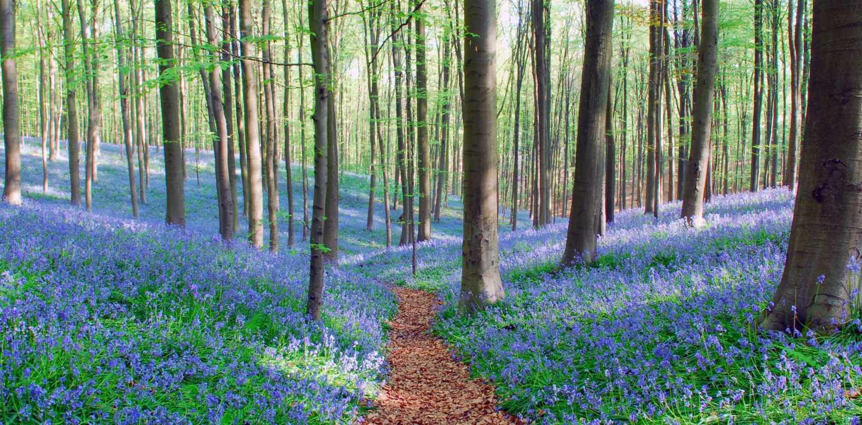 Wandern in Belgien - Genussrouten als auch Fernwanderwege zu Fuß entdecken