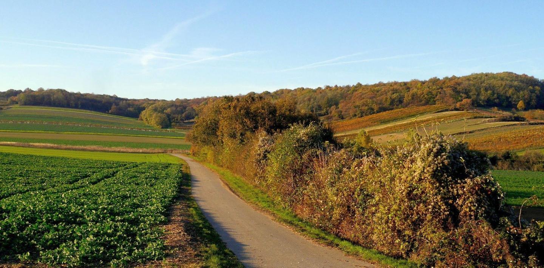 Wandern in Burgenland - Natur pur im Osten Österreichs