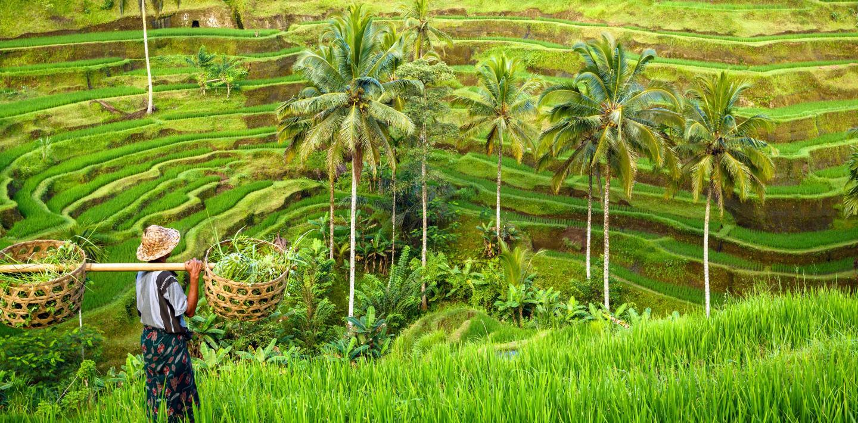 Wandern in Indonesien - den Inselstaat am Äquator entdecken
