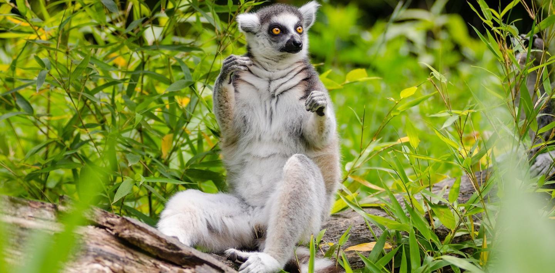 Wandern auf Madagaskar - zu Fuß auf den Spuren der Lemuren