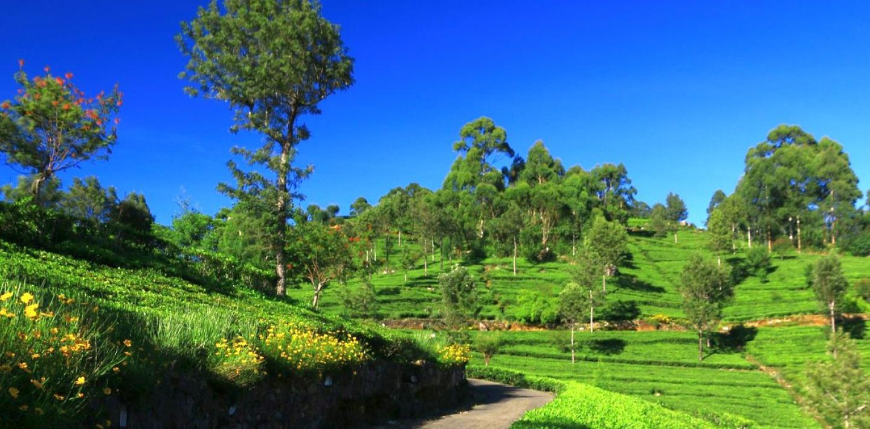 Wandern auf Sri Lanka - eine kontrastreiche Naturlandschaft erleben