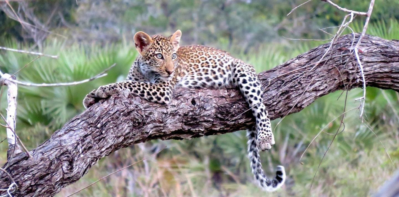 Wandern in Afrika - Steppen, fremde Kultur, exotische Tiere sehen