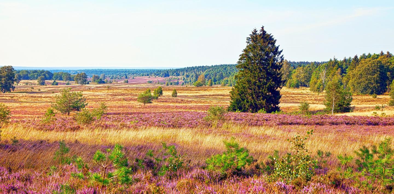 Wandern in der Lüneburger Heide - individuell oder geführt