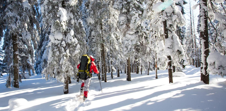 Winter-Aktiv-Wanderungen