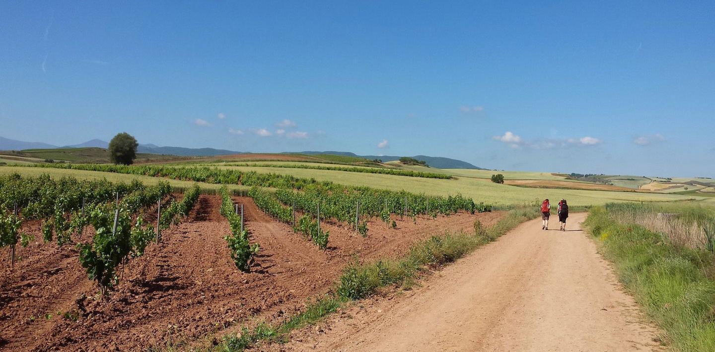 Pilgerwandern auf dem Camino Francés