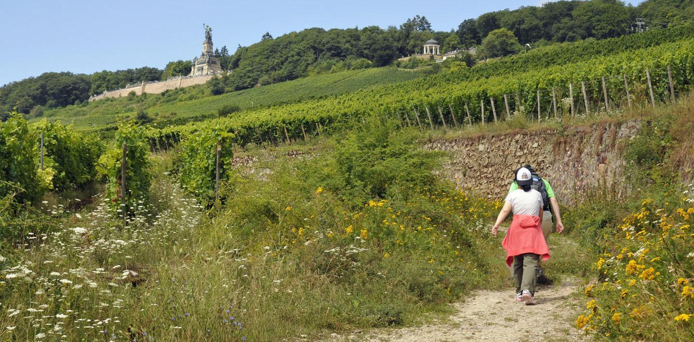 Wandern auf dem Rheinsteig
