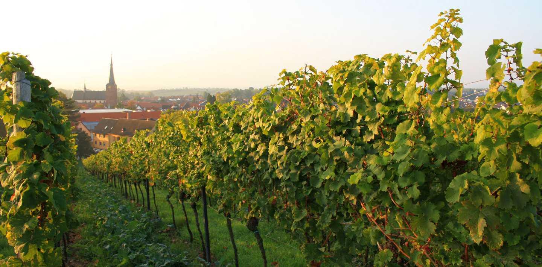 Wandern auf dem Pfälzer-Weinsteig ohne Gepäck