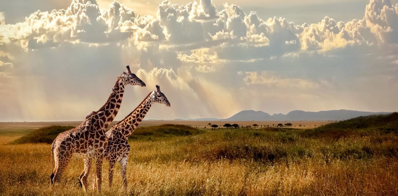 Geführte Gruppenwanderreise: Safaris & Traumstrände zwischen Serengeti & Sansibar
