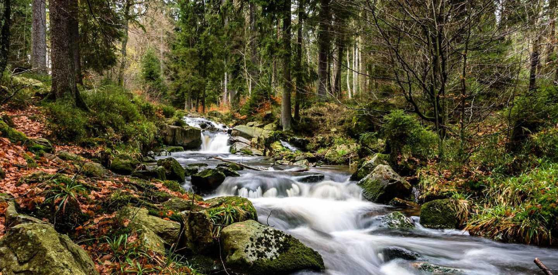 Wandern auf dem Harzer-Hexen-Stieg- individuell wandern im Harz