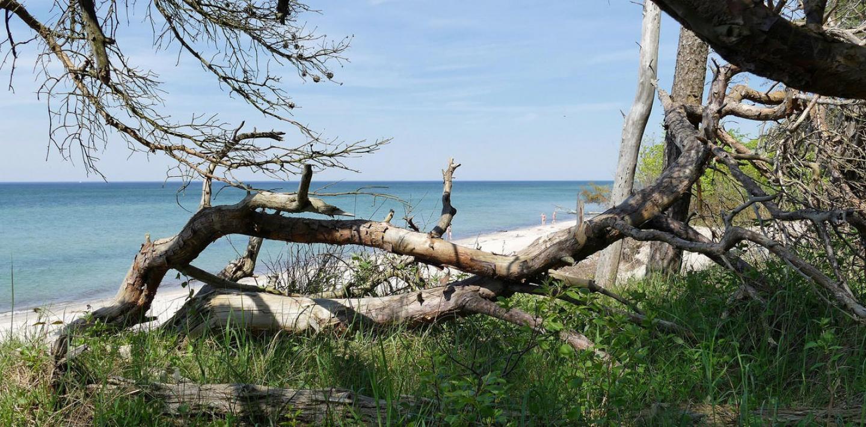 Wandern auf der Halbinsel Fischland - ursprüngliche Ostseeküste zu Fuß entdecken
