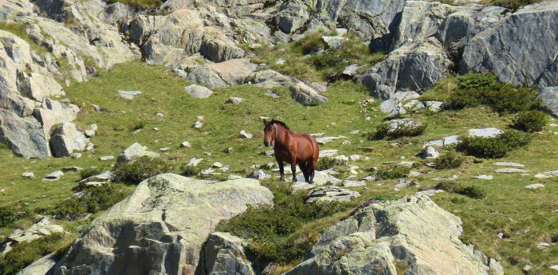 Pyrenäen: Wanderparadies Val d'Aran individuell entdecken - ohne Gepäck