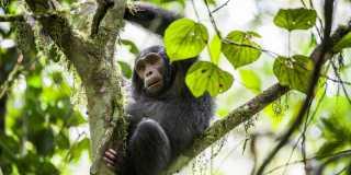 "Wandern in Ruanda - zu Fuß im ""Land der Tausend Hügel"""