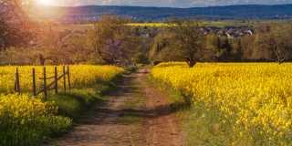 Wandern im Taunus - auf den Spuren der Erdgeschichte