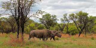 Wandern in Simbabwe - Spektakulär: Wilde Tiere und Viktoriafalls
