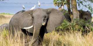 Wandern in Uganda - Tierwelt, Viktoriasee und Nationalparks erleben