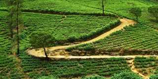 Wandern-auf-Sri-Lanka