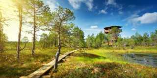 Wandern im Baltikum
