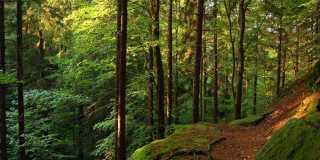 Wandern im Thüringer Wald - Zu Fuß den Rennsteig erkunden