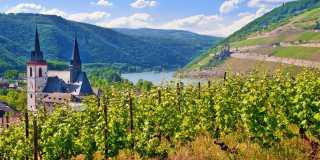 Wandern auf dem Rheinhöhenweg